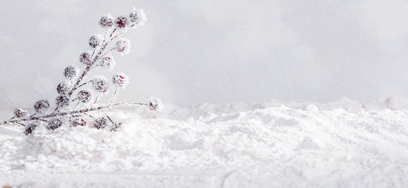 اسلایدر زمستانی پالت